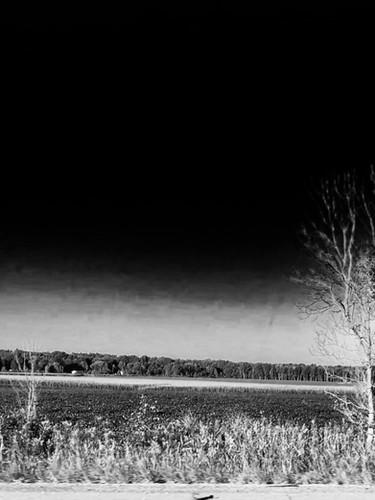 Grass Road Trees Sky.jpeg