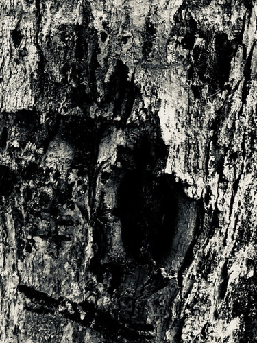 That Screaming Tree by the River.jpg
