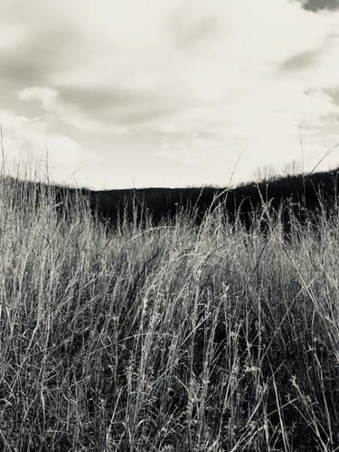 Fire Grass.jpg