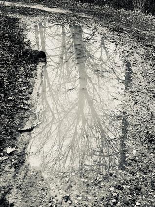 Silver Mud Puddle.jpg