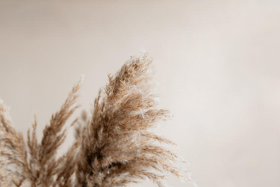 Pampas grass against pecan wall..jpg