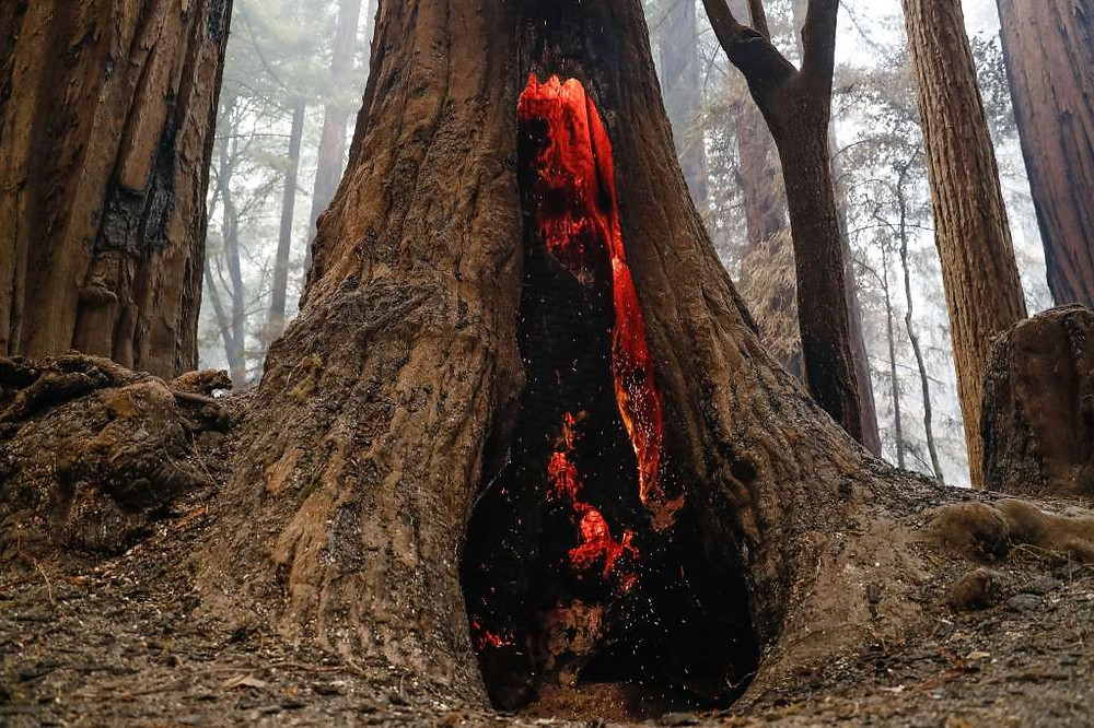 Smoke, embers, and charred wood inside the trunk of a redwood tree in Big Basin State Park during 2020 wildfires