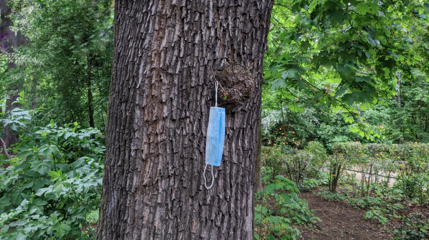 COVID-19 protection mask hung over a branch in a tree along a forest hiking trail in California