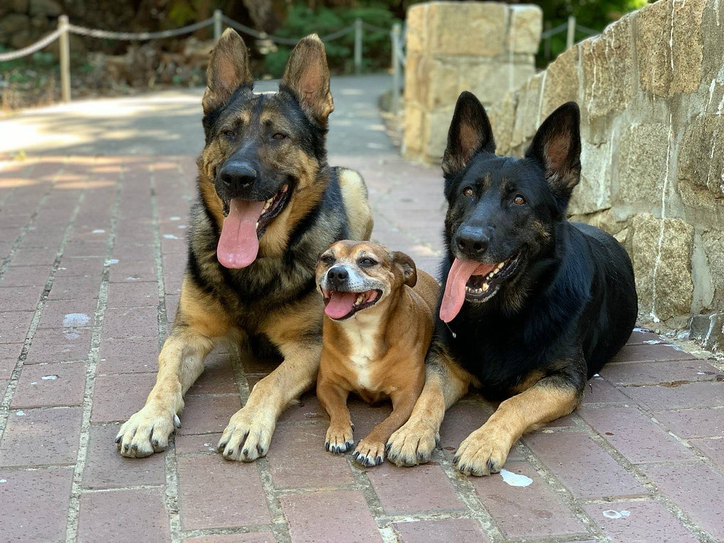 3 dogs in park.jpg