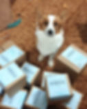 Pocket the corgi is excellent office staff