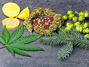 Indica, Sativa... or Terpenes?