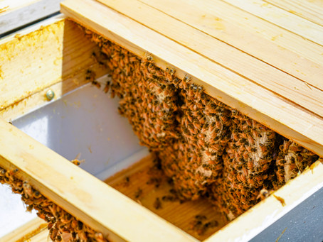 How To: Start Beekeeping