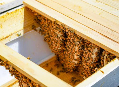 How To: Start Beekeeping