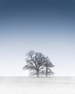 Churcham Trees