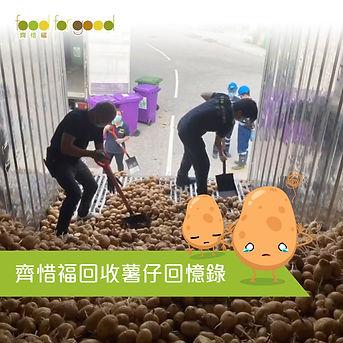 齊惜福回收薯仔回憶錄.jpg