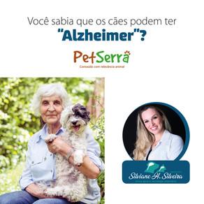 """Você sabia que os cães podem ter  """"Alzheimer""""?"""
