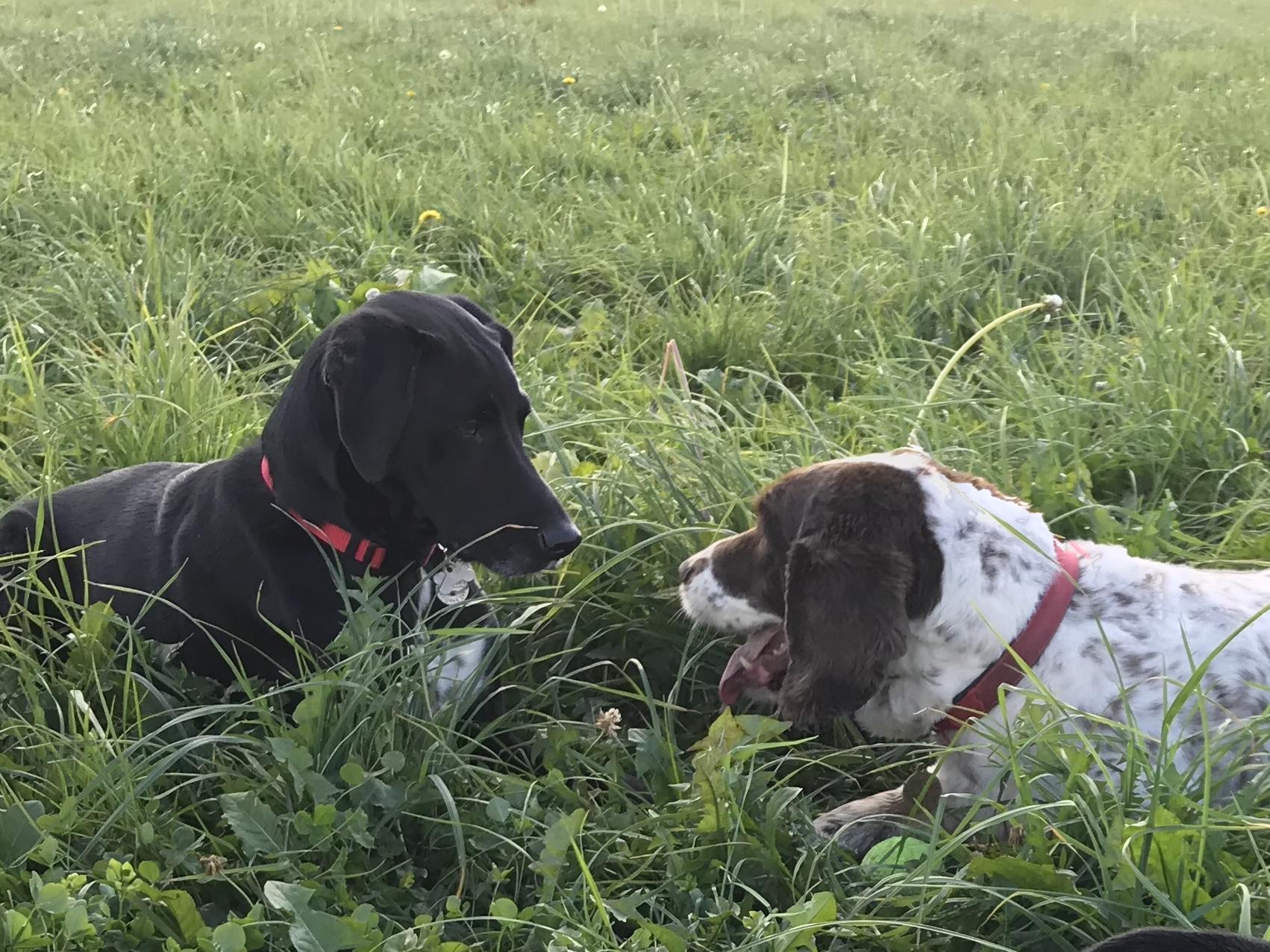 Tom & Riley