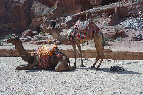 A Siesta in the Petra Shade