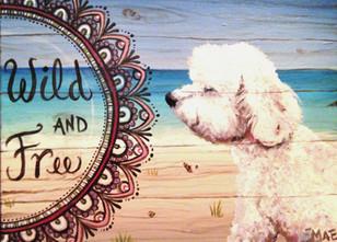 BEACH DOG_edited.jpg