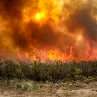les champs de canne à sucre sont brulés « brûlage » avant la coupe.