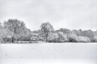 Poigny la Forêt