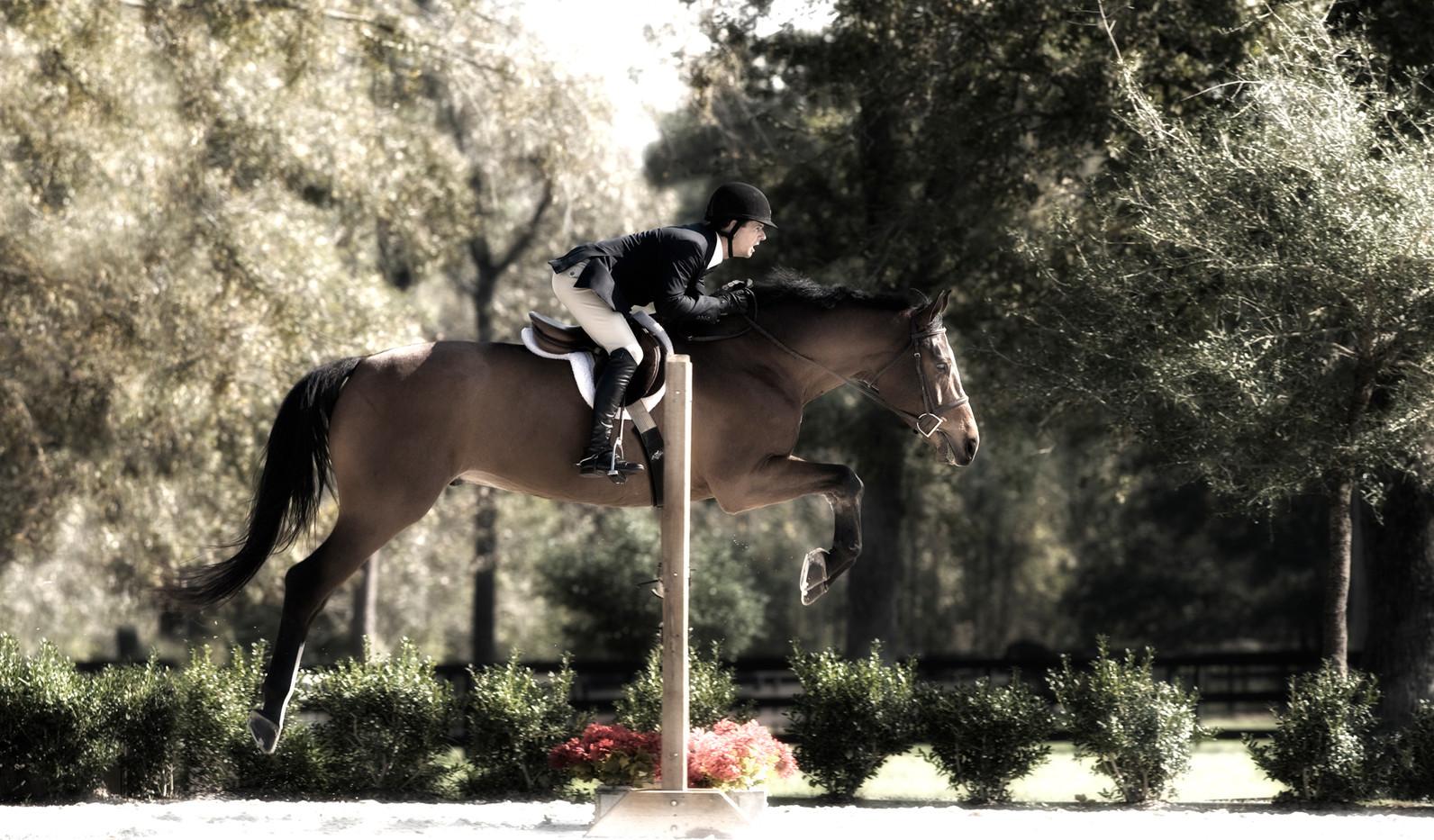 equestrian_houston_photography 4.jpg