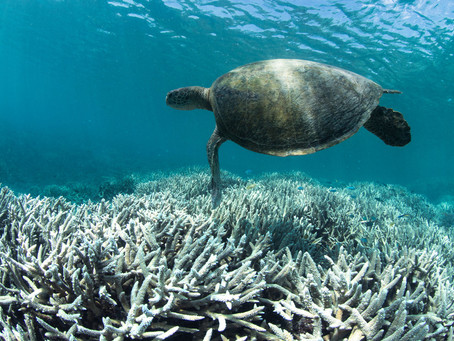 Save Corals, Save the Ocean