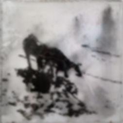 Собаки,  40х40 см., пигмент,плексиглас,смола,2014