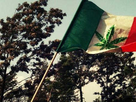 En México se busca regular el uso del Cannabis.