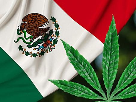 México sería el tercer país latinoamericano en legalizar el uso lúdico de la mariguana