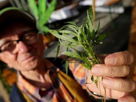 El cannabis medicinal ayuda a cambiar los hábitos de salud en los mayores