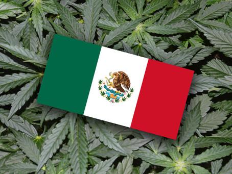 Se aprueba en México la regulación y despenalización del uso lúdico de marihuana en todo el país