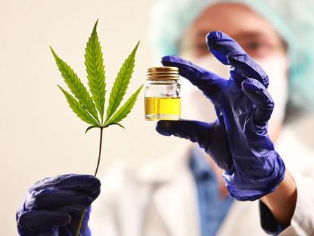 Usan cannabis en hospital para pacientes con COVID-19