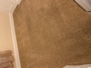 Result of Cleaned Carpet