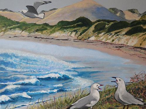 Lancelin Seagulls