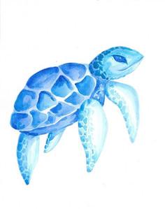 Coastal Sea Turtle