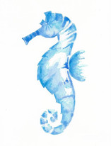 Coastal Sea Horse