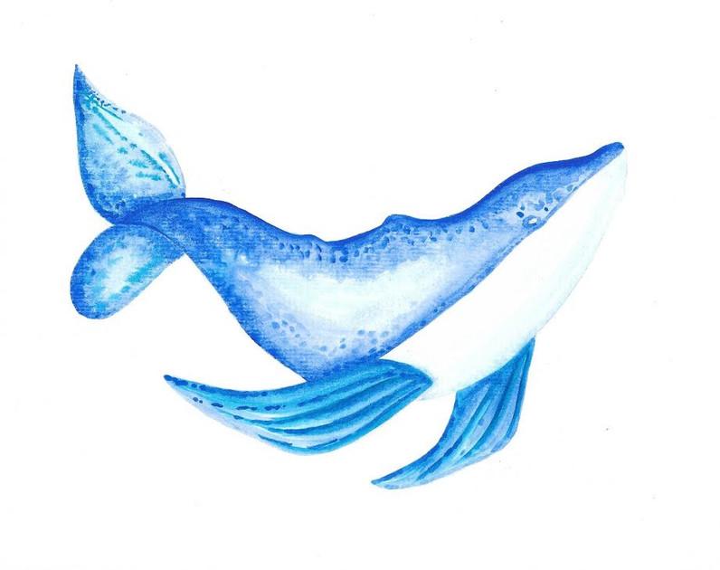 Coastal Whale