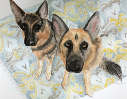 German Shepherd Portrait Commission