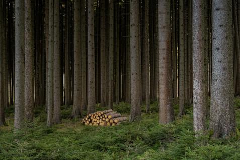 Wald-Herbst-Holz-Baeume-Kaufbeuren-Deutschland-Andreas-Gärtner-Kaufbeuren-Fotograf.jpg