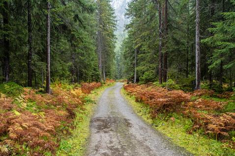 Wald-Herbst-Weg-Baum-Lech-Farn-Österreich-Andreas-Gärtner-Kaufbeuren-Fotograf.jpg