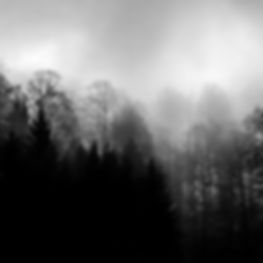 Trees in clouds (2019)
