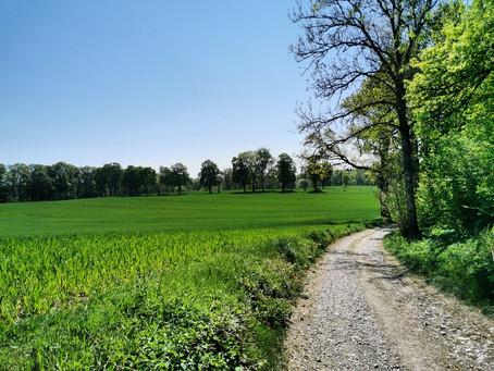 Bei den Unken und im Isarauwald zwischen Ebenhausen und Icking