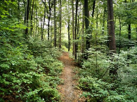 Pfälzer Waldpfad, Etappe 3: Von Felsen und Ruinen im grünen Wald