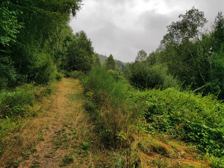 Pfälzer Waldpfad Etappe 2: Kilometerlang nur Wald