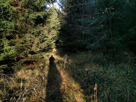 Stille im Wald am Bärensee