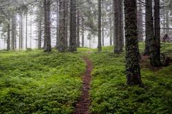 Wald-Sommer-Pfad-Baeume-Tragöss-Österrei