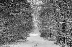 Wald-Winter-Schnee-Weg-Buchloe-Bayern-An