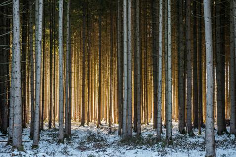Wintersonnenwald
