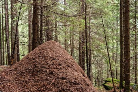 Hau im Wald