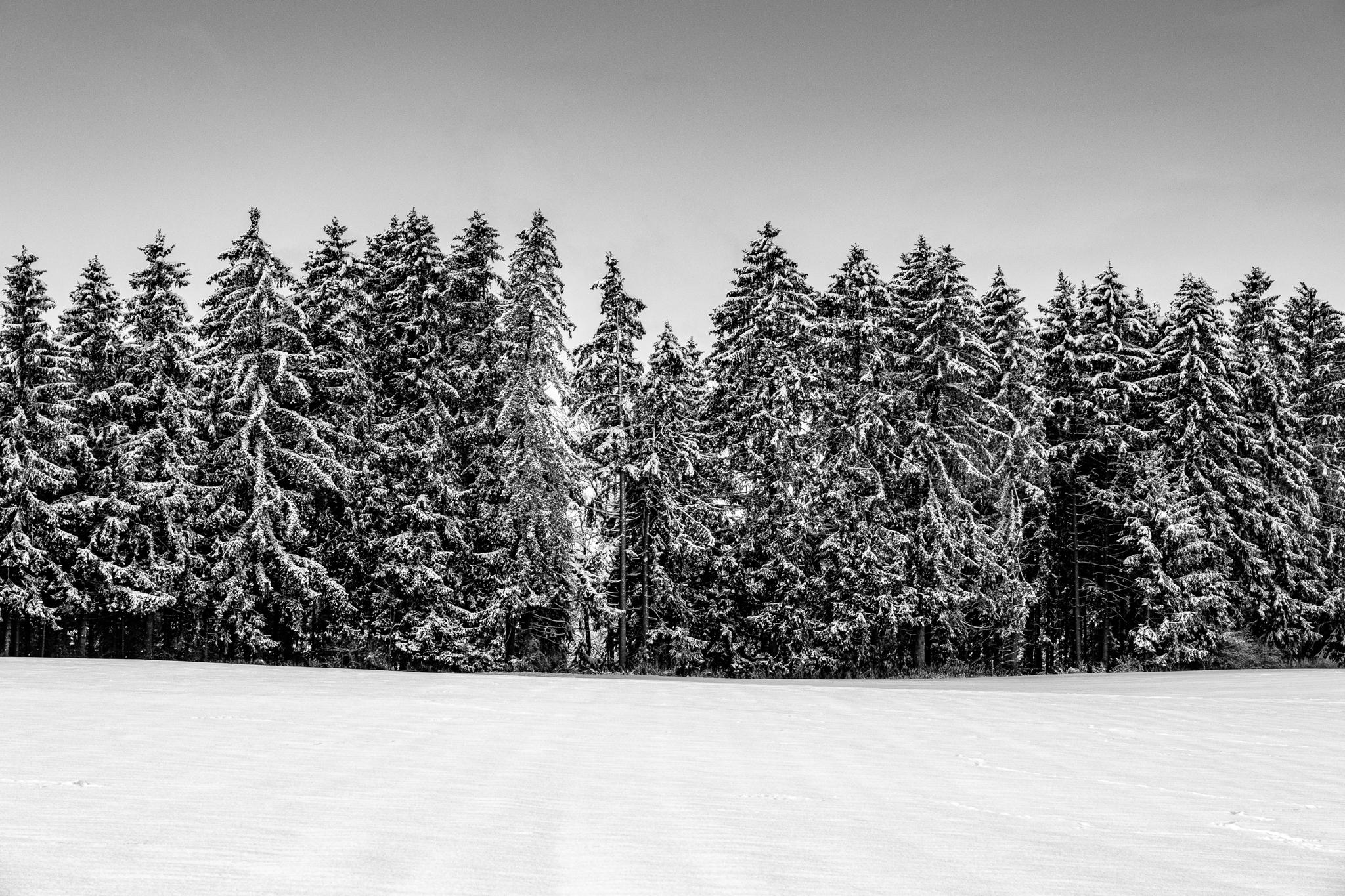 Wald-Winter-Schnee-Baeume-Leuterschach-B