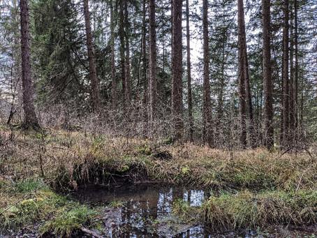 Im stillen Wald am Bärensee