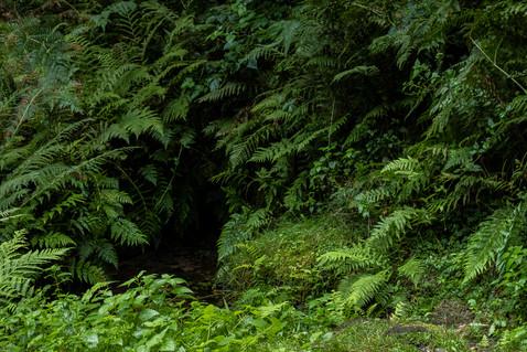Wald-Farn-Quelle-Wasser-Pfaelzerwald-Deutschland-Andreas-Gärtner-Kaufbeuren-Fotograf.jpg