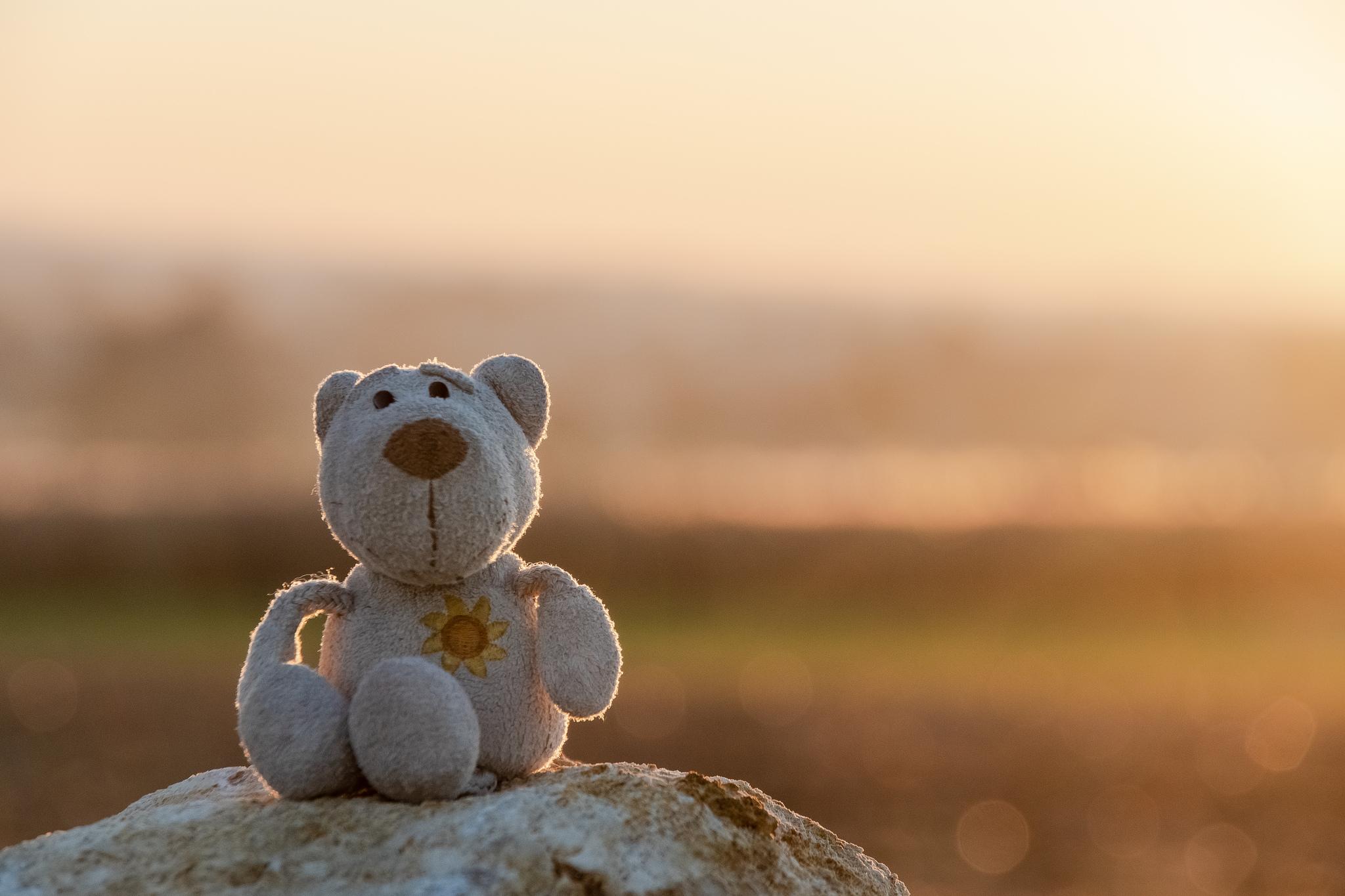 Fredi in der untergehenden Sonne