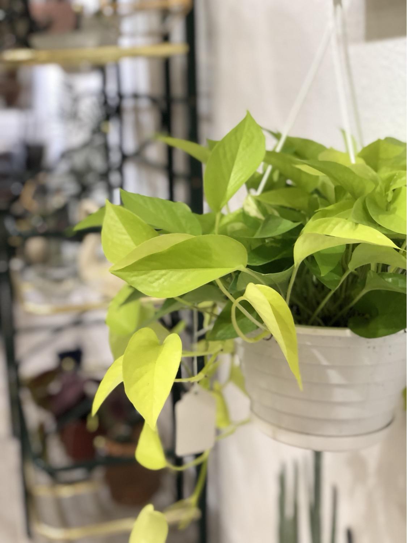 February Free Plant Swap!